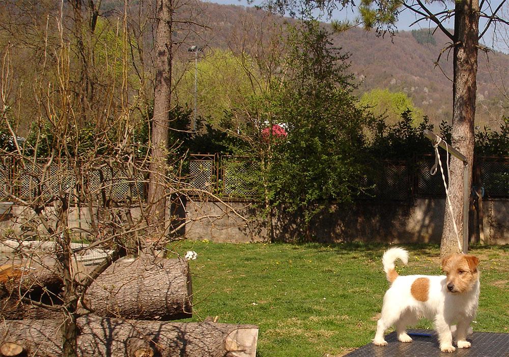 dog_island_di_tarcento_love_jack_russell_terrier